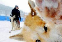 Photo bombing animals