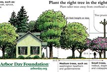 StraTREEgic Planting / Placing the right tree in the right place to improve energy efficiency.