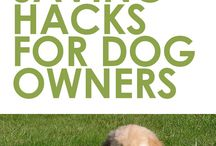 Hacks for Dog Owners