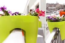 Gardening / by Irene & Steve Doherty