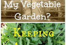 What's Wrong with my Vegetable Garden / Organic Solutions to Common Vegetable Garden Problems