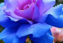 bloemen / flowers / garden / floral / bloemen en tuin
