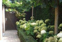 Garten und Pflanzen
