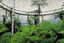 A. Greenhouse