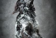 Flying Doc / Hund, Dog, Flying Doc