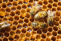 Bees love Honey / Pins all about Beekeeping.