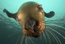 Underwater / by Denise Traister