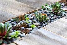 Garden Plants and designs