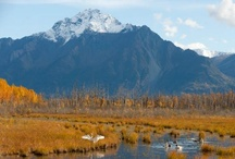 alaska / by Beth Rawlings Huhn