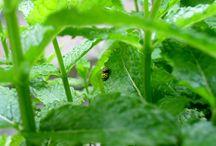 nel mio orto-giardino