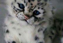 cute katte