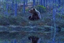 I Love Bears in the Woods. Just Like My House