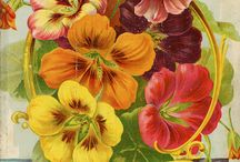 Antique Seed Posters & Catalogs