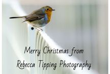 Photography / Rebecca Tipping Photography