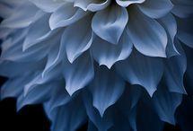 Flowers / by Elizabeth DeSantis