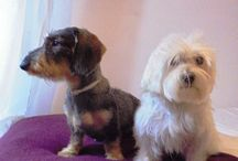 Con Perros y a lo loco / ¡Hola! Me llamo Celia y este es mi blog. Desde Con Perros y a lo loco quiero enseñaros un poco de mí, de mis perros y de todo lo que me apasiona, que no es poco.