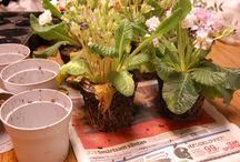 Blommor och grönt inne