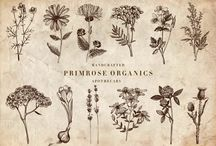 Primrose Organic's apothecary