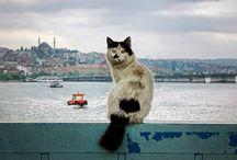 kedi_resmi