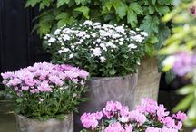 Syksyn ruukkuistutukset - Autumn Display in Pots / Ideas for Autumn planting in pots and baskets.