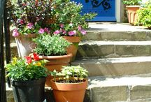 Curb Appeal  / Lighting, door numbers that are clear from the road, pretty planting and striking topiary flanking the door; make coming home a beautiful feeling.