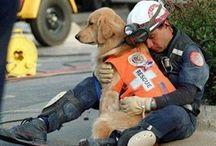 Healing Power of #Pets / Pets heal us in amazing ways.