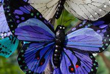 Butterflies / by Rebeca Williams