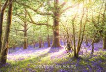 Bluebell Woods / In Visiting Lilly by Toni Allen DI Jake Talbot is enchanted by a painting of a Bluebell Wood. http://bit.ly/VisitingLilly Visiting Lilly is now FREE on #KindleUnlimited #ToniAllen #mystery #thriller