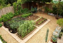 Garden allotment