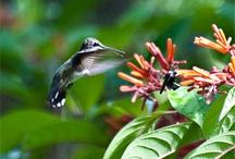 Hummingbirds/Butterflies / by Barbara Haddad