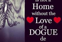 dog the bordeaux