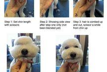 Pups! Pups! Pups!