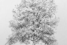 British / Welsh / English trees - my drawings / Carbon pencil drawings of trees, simply because I love trees!