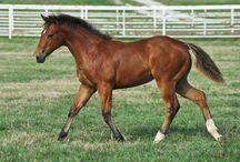 Cavalos - Beleza e Elegância