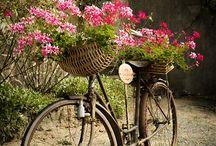 kerékpár  ban virág