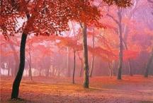 Fantastic Nature Images