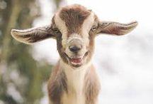 Animales Felices / En realidad no sabemos si estos animales están felices, pero las expresiones capturadas en estas imágenes nos hacen pensarlo así. ¡Estamos seguros que al menos a ti te harán felices y dibujarán una sonrisa en tu cara!