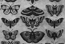 Tattoo Mariposas