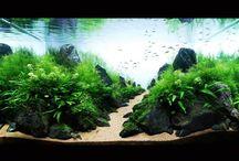 aquarium projet idea
