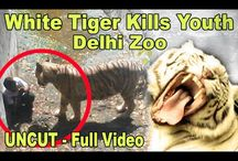 Exclusive: White Tiger killed 22-year-old youth in Delhi Zoo