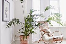 Växter / Växter