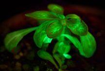 ARLEO -- Earth Natural Lighting / The natural lighting earth brings