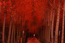 ♥ autumn foliage ♥