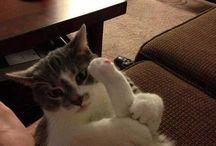 Cats r fun