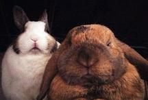 rabbit eun byeol