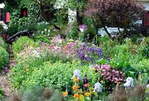 For the love of my dream garden