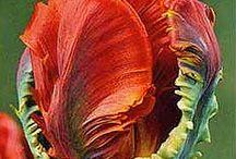 Color Inspirations / by Kim {KimboZ Art}