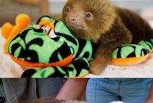 Animalitos encantadores