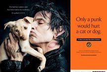 Help our animals / by Regina Boyce