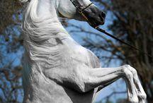 łoodi - konie - okulary